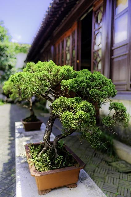 Świeże nasiona bonsai